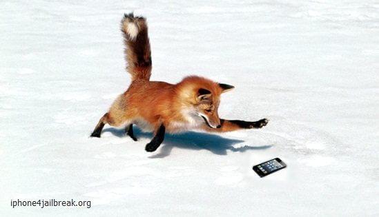 fox stealing iphone 5-
